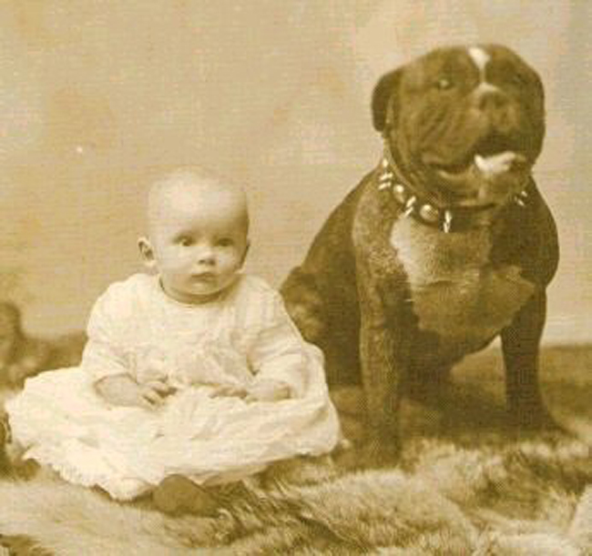 """the quintessential family dog, even earning the nickname """"Nanny Dog ..."""