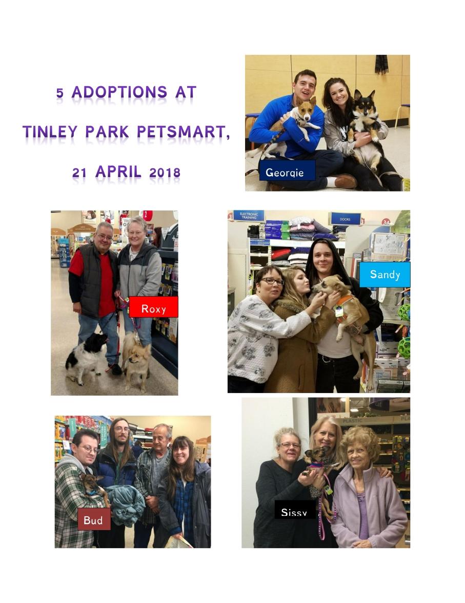 5 adoptions