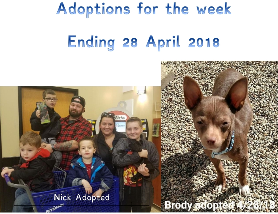 Adoptions week ending 28 April