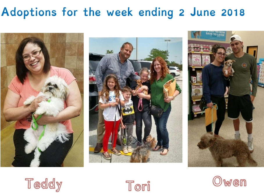 Adoptions for the week ending 2 June 2018