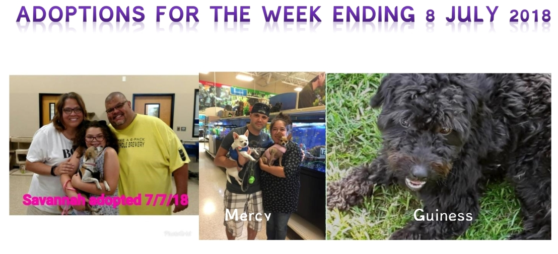 Adoptions for the week ending 8 July 2018