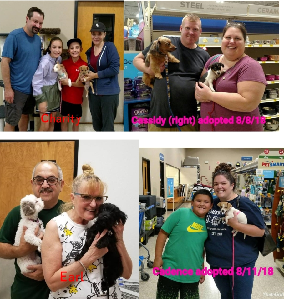 Adoptions for the week ending 12 August 2018