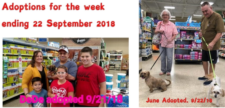 Adoptions for the week ending 23 September 2018
