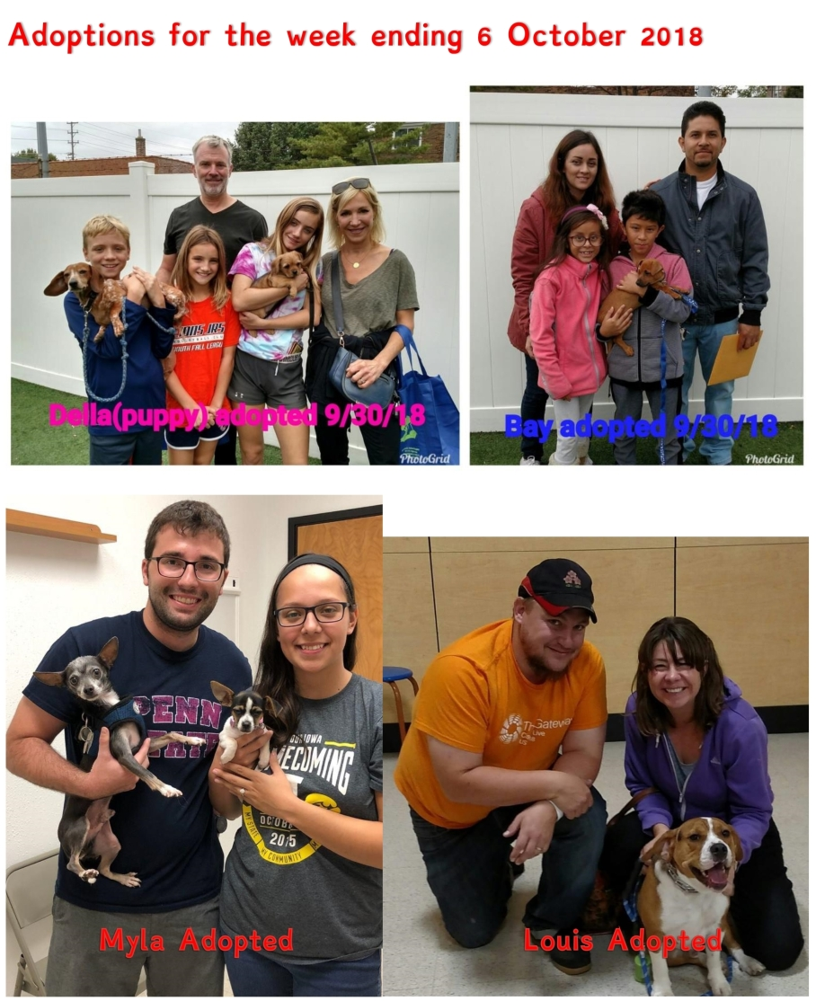 Adoptions for the week ending 6 Oct 2018