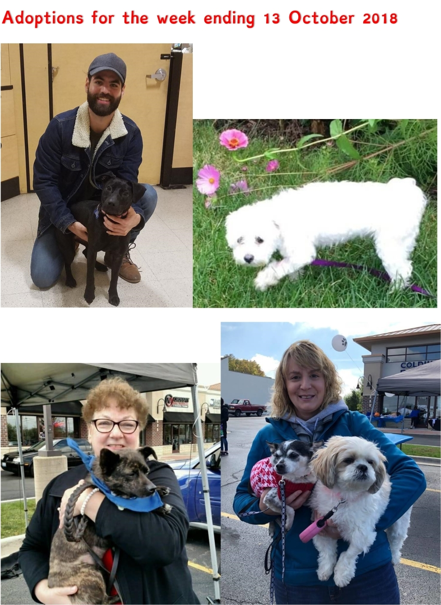 Adoptions for the week ending