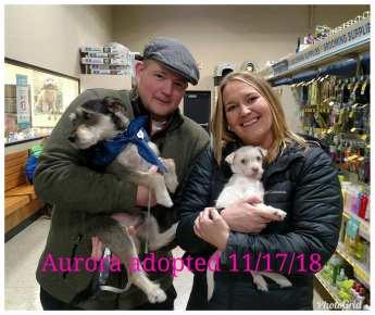 Aurora Adopted