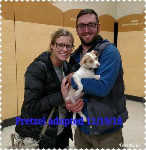 Pretzel Adopted