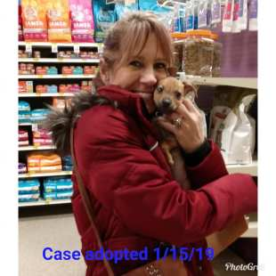 case adopted 15 jan