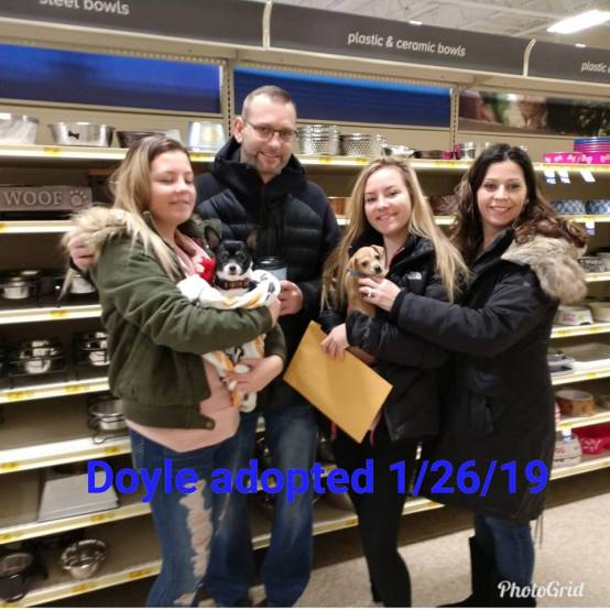 doyle adopted