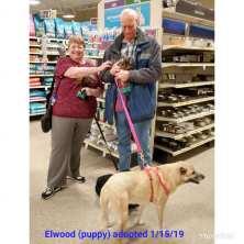 elwood adopted 15 jan