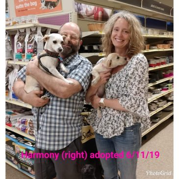 Harmony Adopted