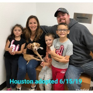 Houston Adopted