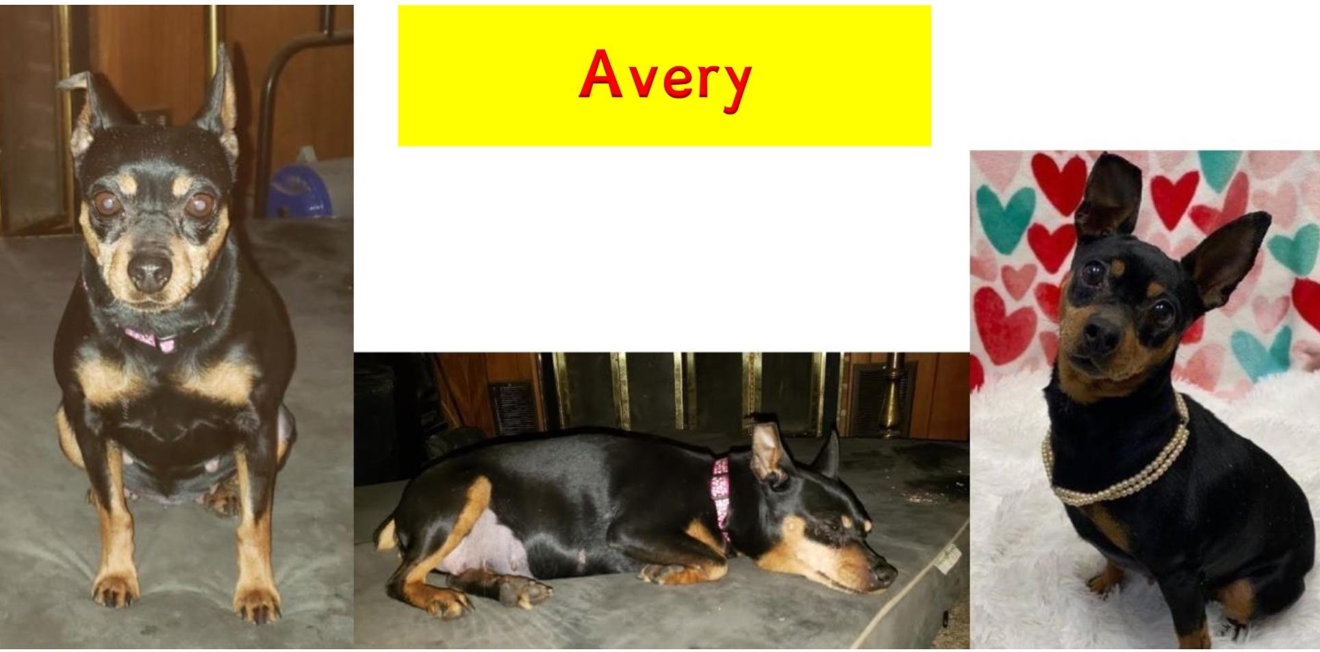 Avery_pic_heading